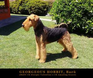 20170625-24672-georgeous-hobbit-baru-padre-dei-cuccioli